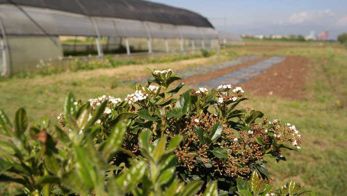 campi e serre in agricoltura biologica certificata